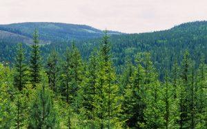 Le foreste di proprietà SCA